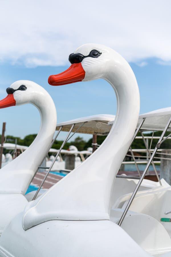 Łabędzie głowy pedałowe łodzie obrazy royalty free