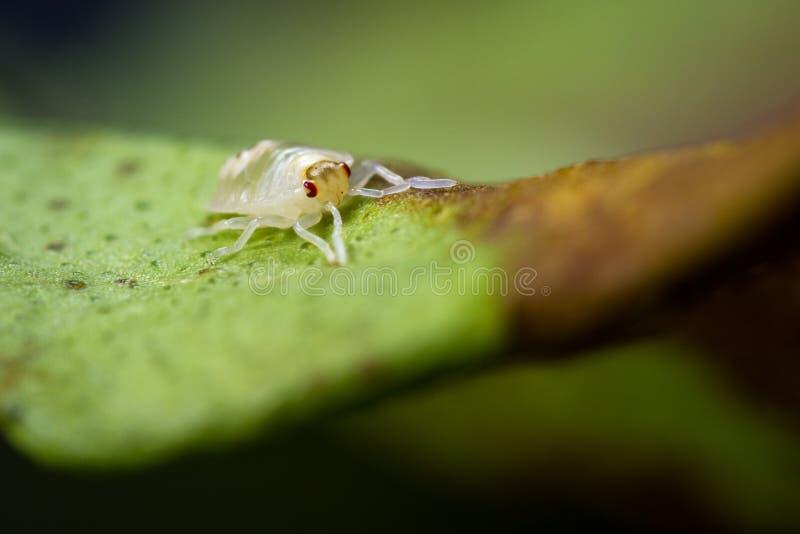Łaciasta pająk lądzieniec fotografia royalty free