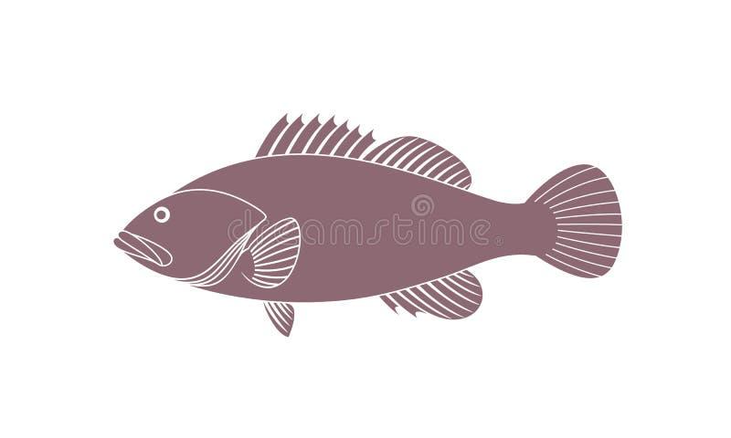 Łaciasty Grouper Odosobniony grouper na białym tle ilustracja wektor