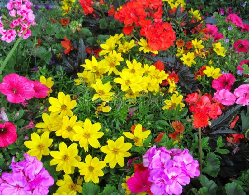 Ładna & Jaskrawa Kolorowa wiosna Kwitnie 2019 zdjęcie stock
