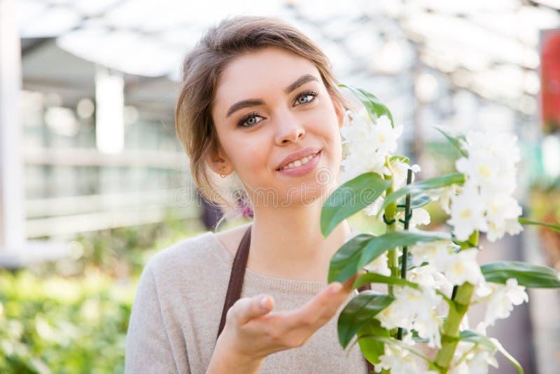 Ładna kobiety ogrodniczka z białą kwitnącą orchideą w oranżerii zdjęcia stock