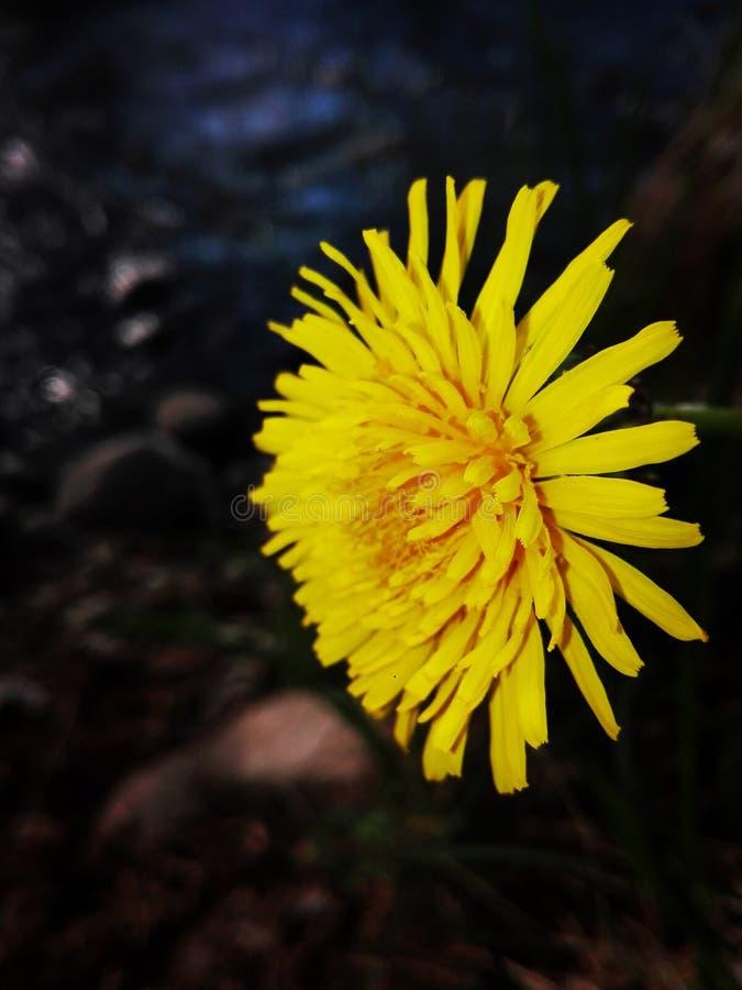 Ładna kwiat kamera zdjęcia royalty free