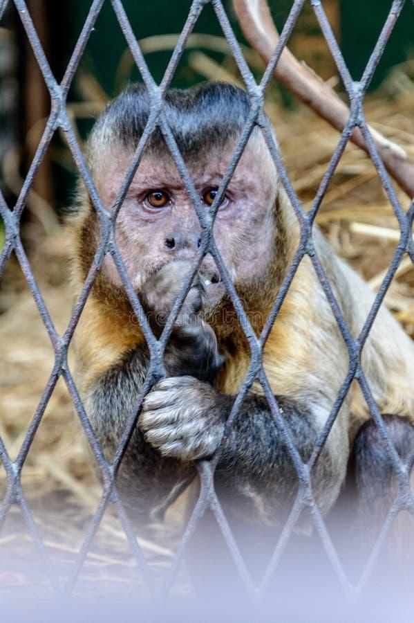 Ładna małpa w zoo zdjęcie stock