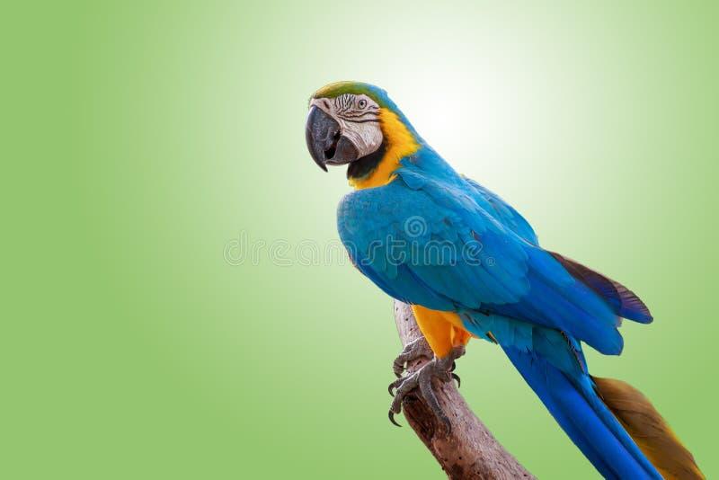 Ładna papuga na gałąź zdjęcie royalty free