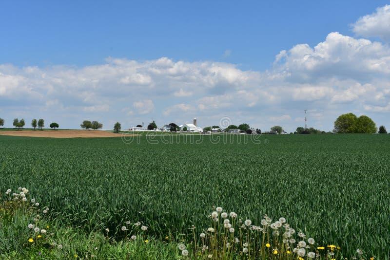 Ładna Pennsylwania ziemia uprawna na Ładnym wiosna dniu obraz royalty free