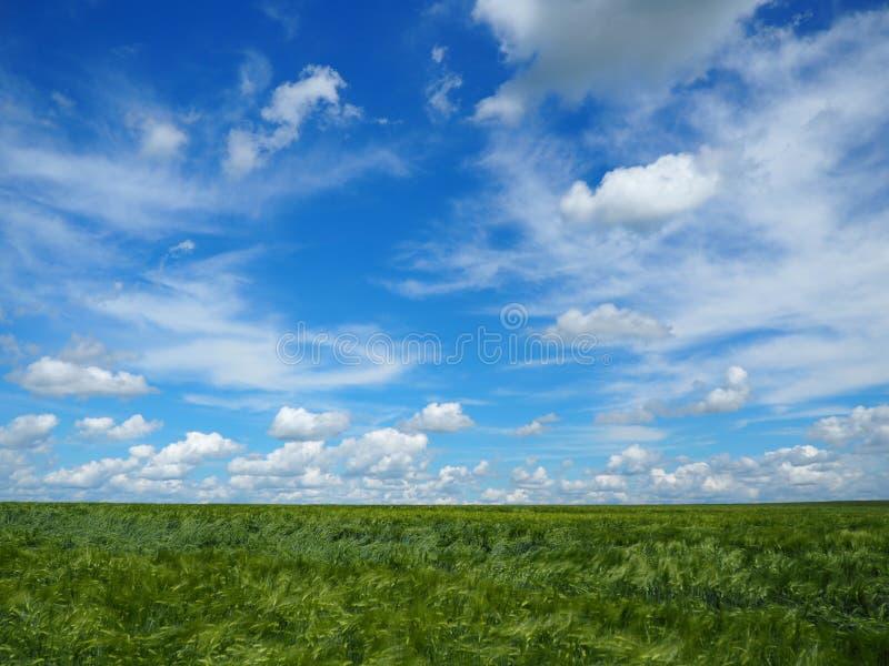 Ładna pogoda przy polami zdjęcia stock