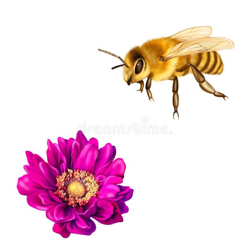 Ładna pszczoła, Różowy Mona Lisa kwiat, wiosna kwiat royalty ilustracja