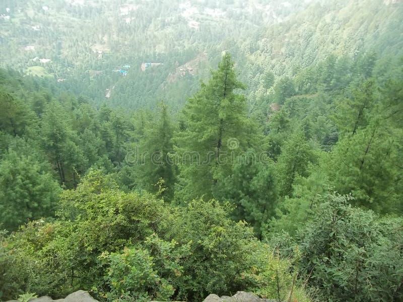 Ładna sceneria blisko do natury, zdjęcia royalty free