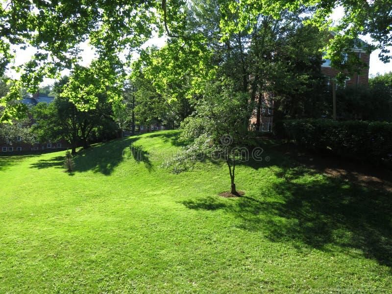 Ładnego lata Zielona trawa w sąsiedztwie obrazy royalty free