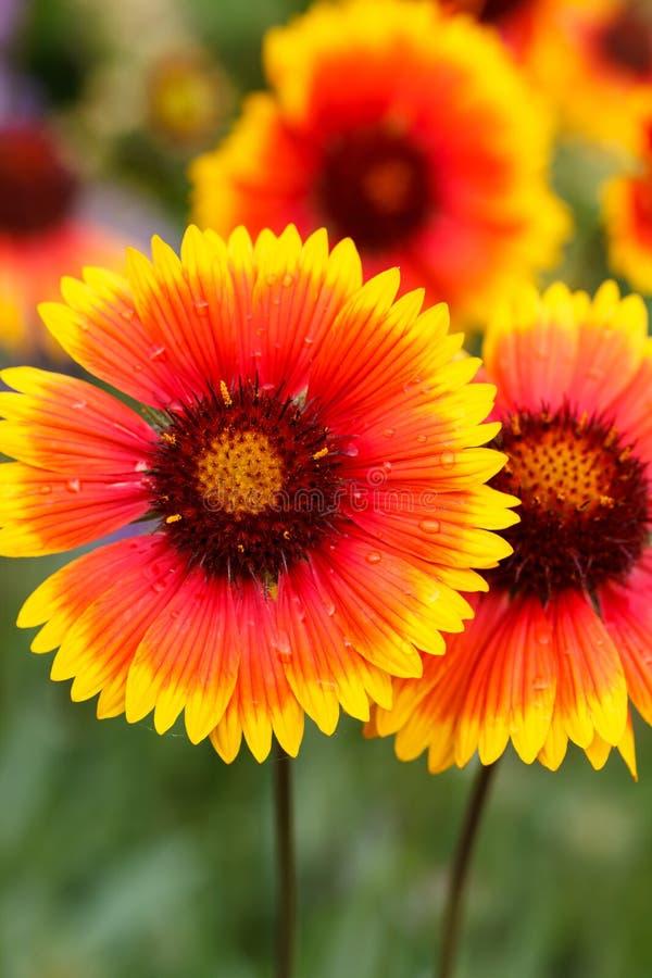 Ładni kwiaty zdjęcia stock