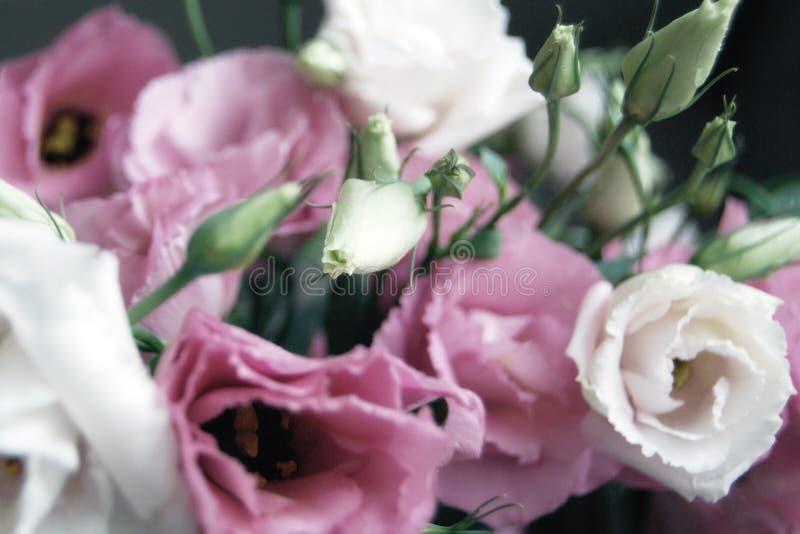 Ładny bukiet menchii i białych preryjnej gencjani kwiaty w miękkiej ostrości obrazy stock