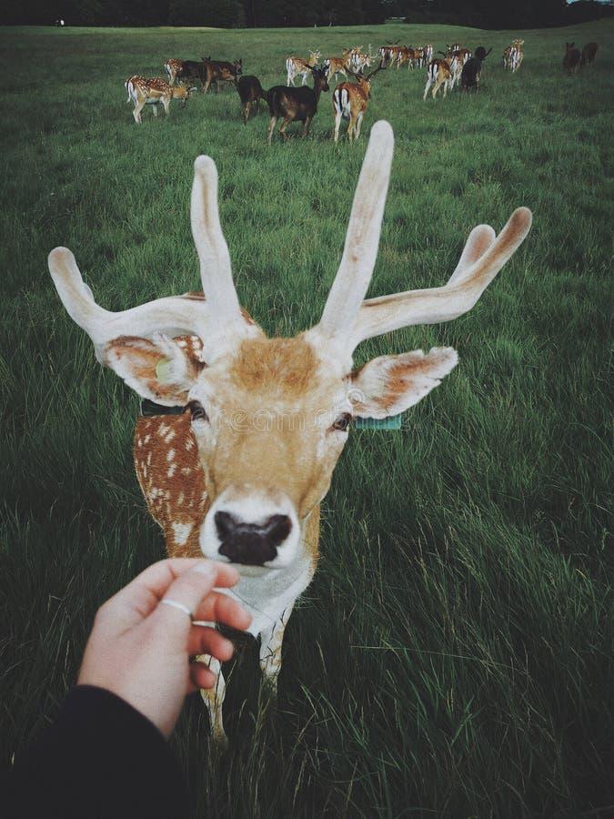 Ładny chłopaczyna w feniksa parku fotografia royalty free