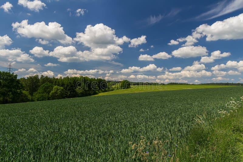 Ładny jęczmień zieleni pole z łąką, drzewami i chmurnym niebieskim niebem, czecha krajobraz obrazy royalty free