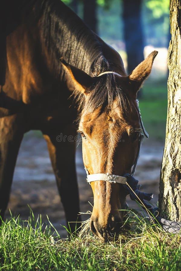 Ładny koń obraz royalty free