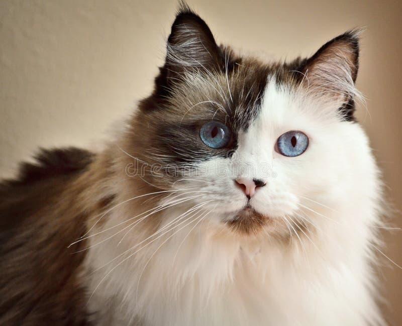 Ładny kot fotografia royalty free