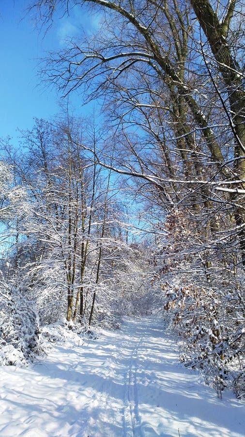 Ładny las w zimie fotografia royalty free