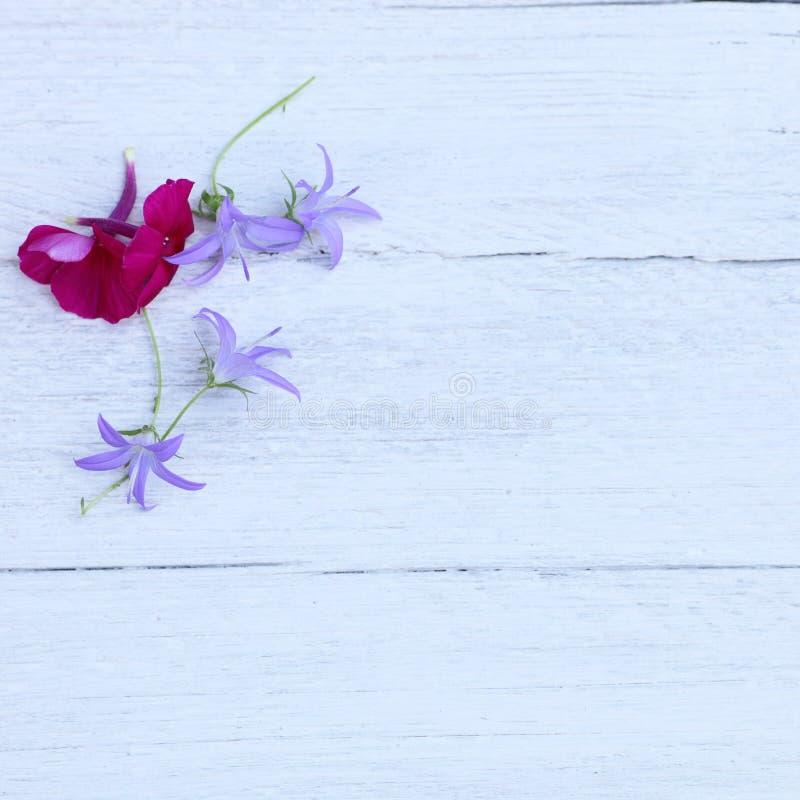 Ładny lato kwitnie z copyspace fotografia stock