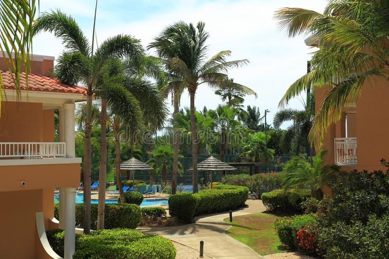 Ładny natura krajobraz Aruba wyspa Drzewka palmowe, krzaki, rośliny zdjęcie royalty free