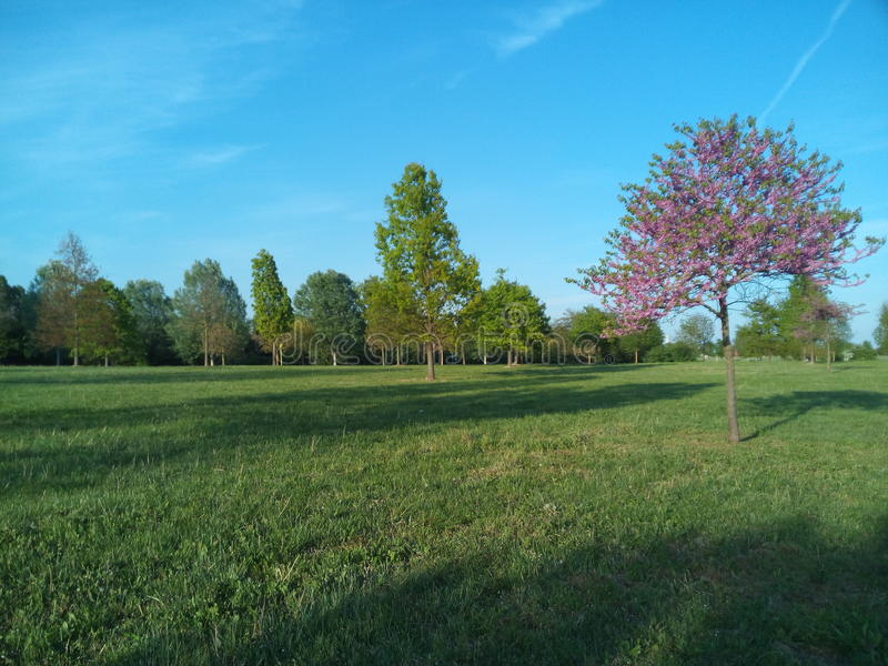 Ładny park w Wenecja obrazy royalty free