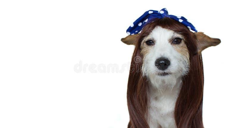 ŁADNY pies Z DŁUGIE WŁOSY PO IŚĆ PRZY fryzjerem ODIZOLOWYWAŁ A fotografia stock