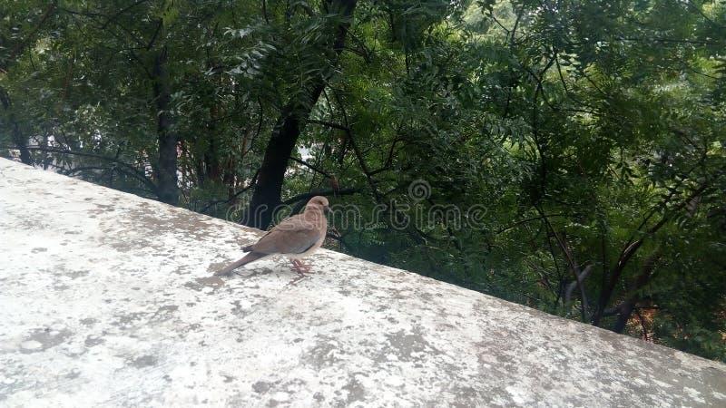 Ładny ptak zdjęcia royalty free