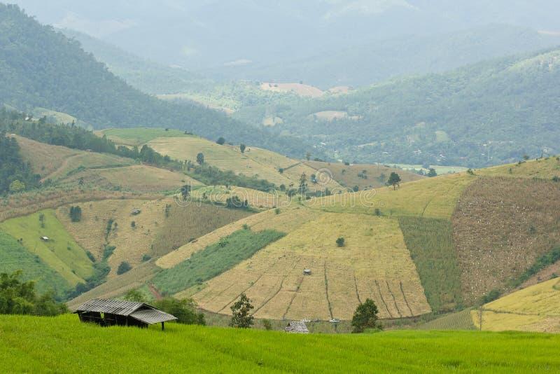 Ładny ryżu taras zdjęcie stock