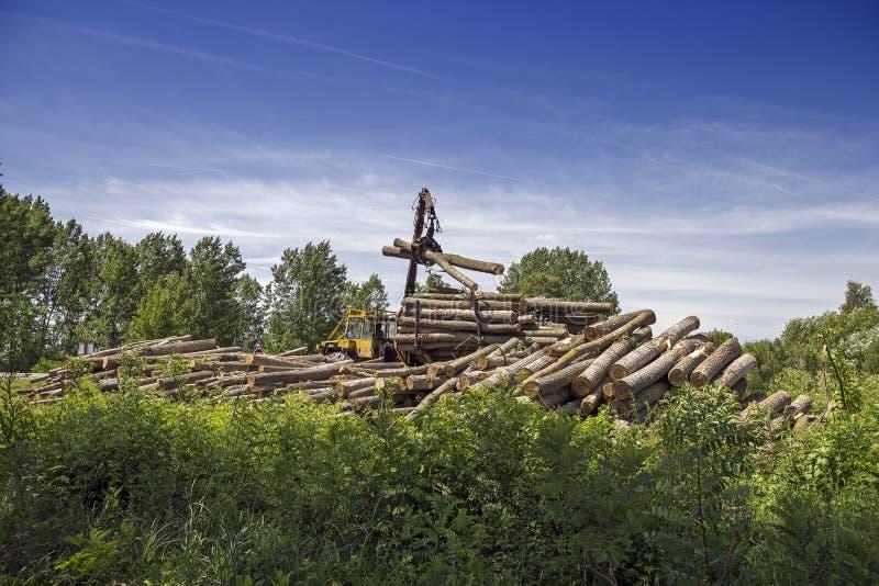 Ładujący ciężarówkę drzewo bele Pełno - tarcica przemysł zdjęcie royalty free