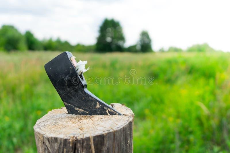 Łamana cioska na tle zielone łąki fotografia stock