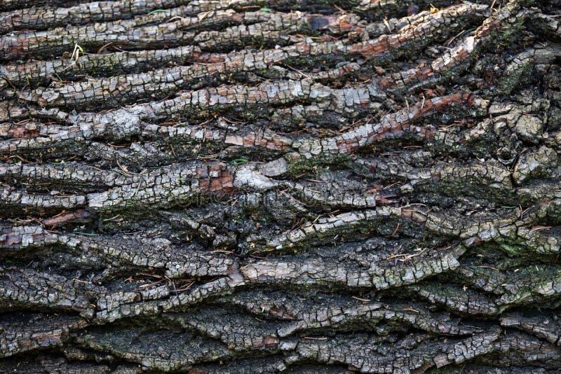Łamana drzewna miedza z jedlinowymi igłami i mech, Austria obrazy royalty free