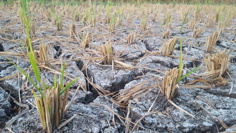 Łamana glebowa opłata długa pora sucha zdjęcia stock