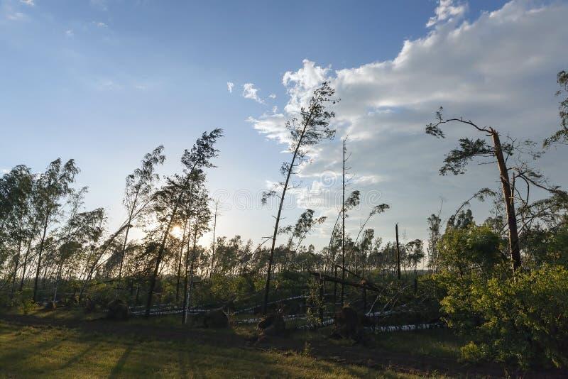Łamani drzewa po burzy obrazy royalty free