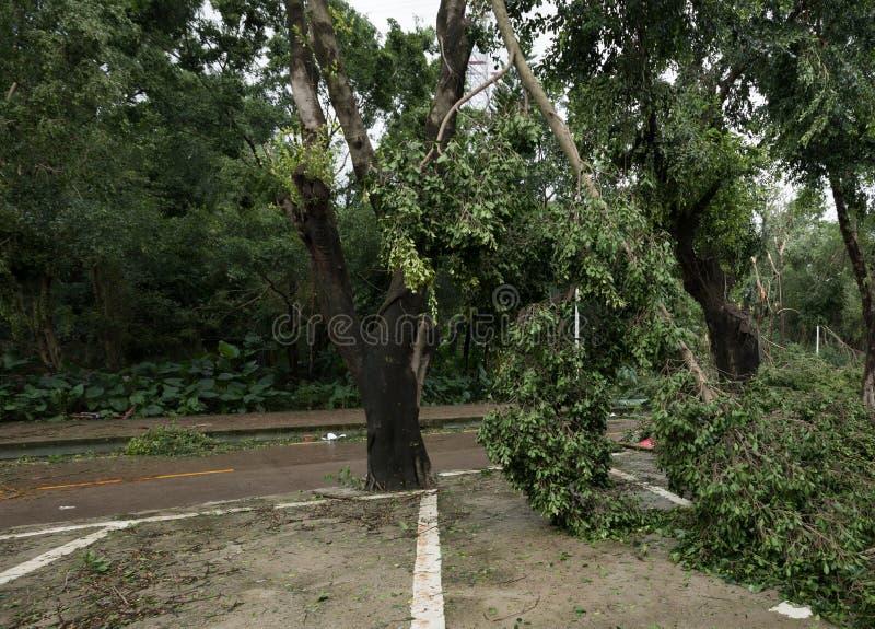 Łamany drzewny spada puszek na parking fotografia royalty free