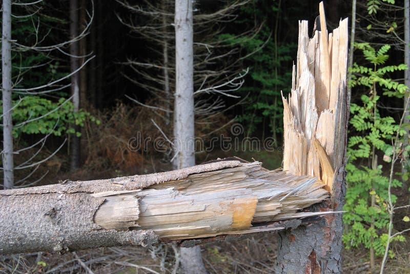 łamany drzewo zdjęcie stock