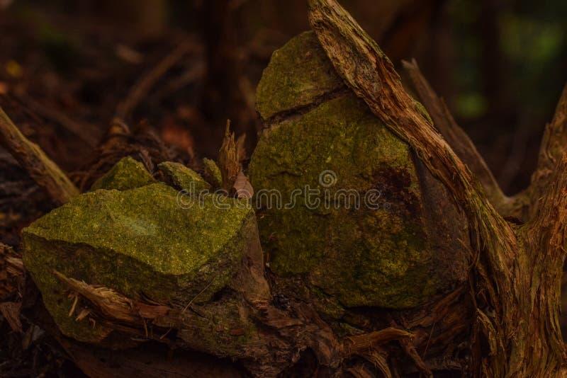 łapać skały, Nikko Japonia obrazy stock