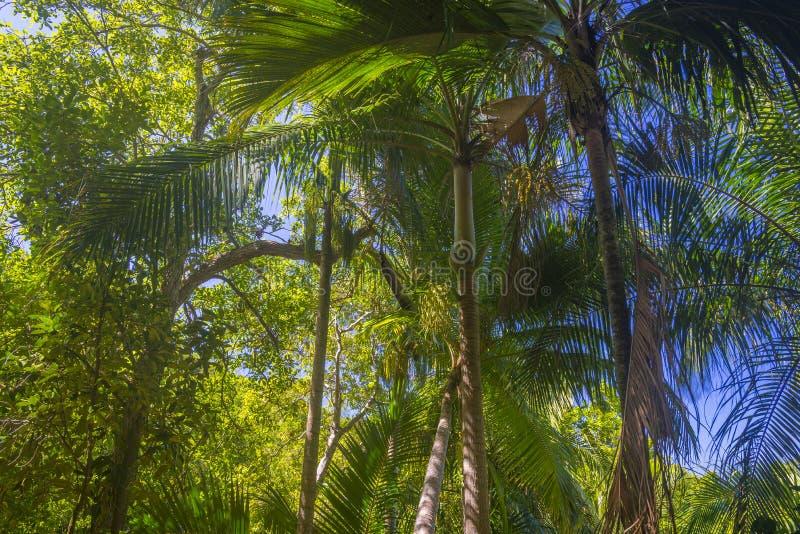 Łasa Ferdinand naturalna rezerwa, Seychelles zdjęcia stock