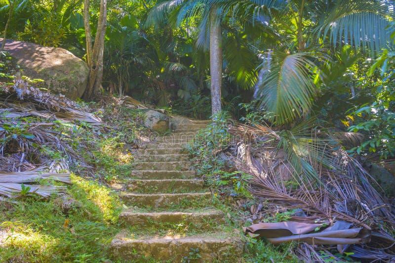 Łasa Ferdinand naturalna rezerwa, Seychelles zdjęcie royalty free
