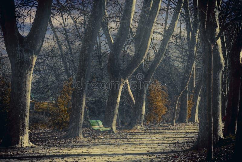 Ławka obok drzew zdjęcia stock