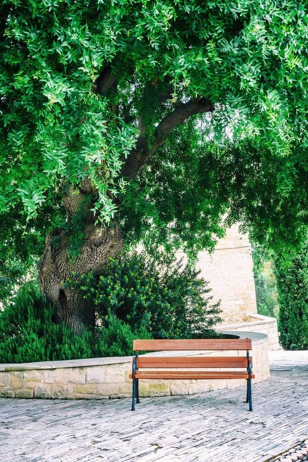 Ławka pod Carob drzewem obrazy stock