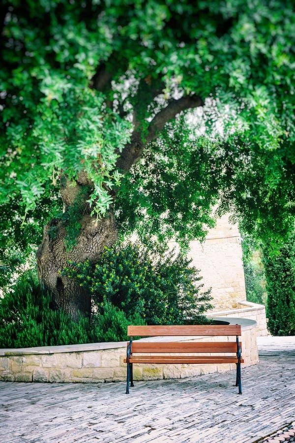 Ławka pod Carob drzewem fotografia stock