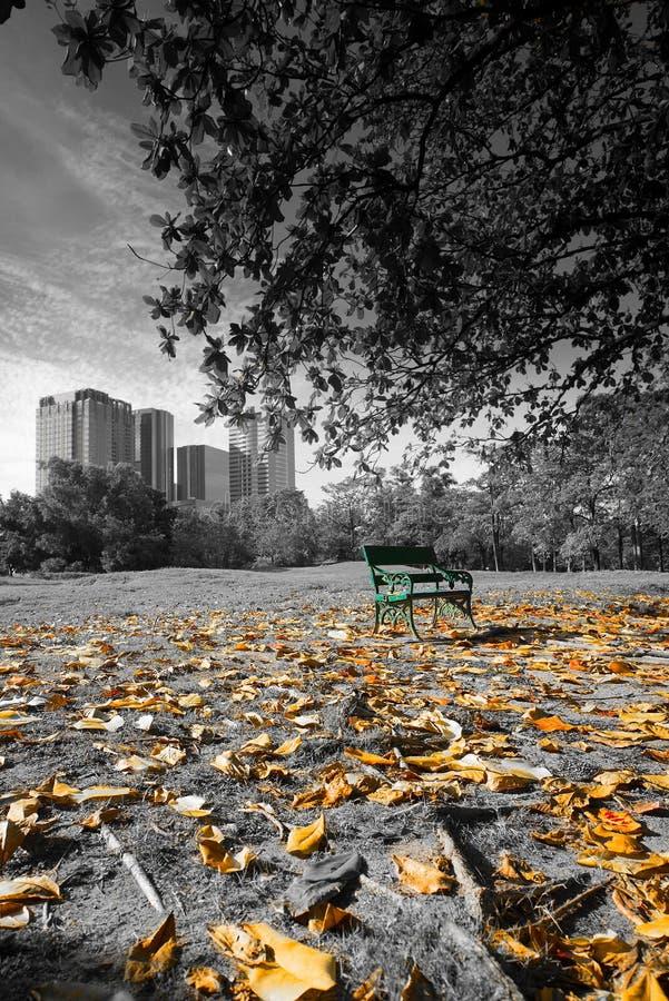 Ławka pod drzewem zdjęcia stock