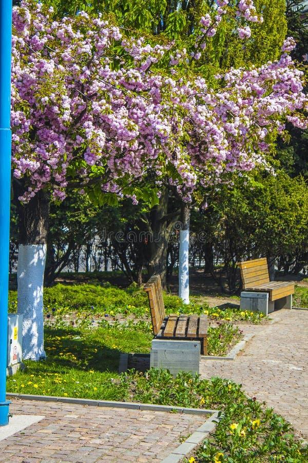 Ławka pod kwiatami zdjęcia royalty free