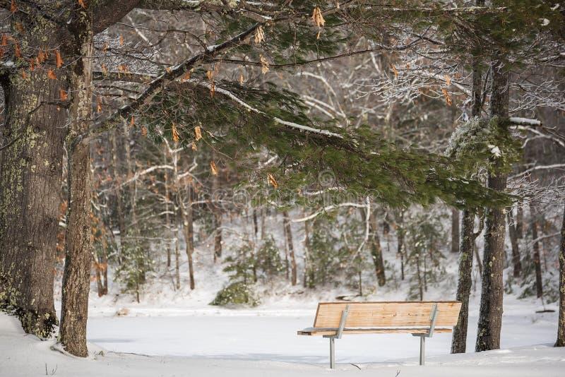 Ławka przy lasowym jeziorem w zima lasowym Pięknym czystym iskrzastym śniegu fotografia royalty free