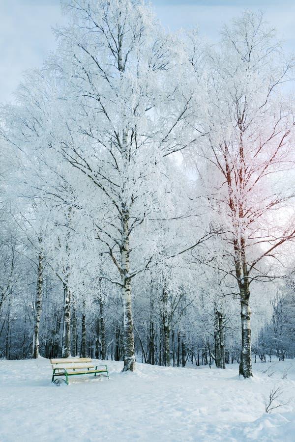 Ławka w śnieżnym parku Północny krajobraz fotografia royalty free