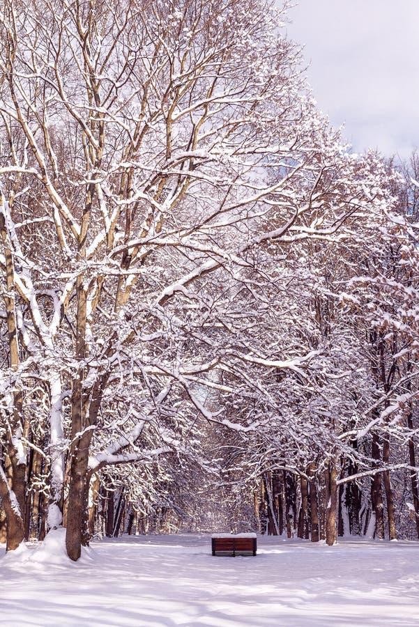 Ławka w śniegu pod śnieżnym drzewem Lasowy Pogodny zima dzień w parku zdjęcia royalty free