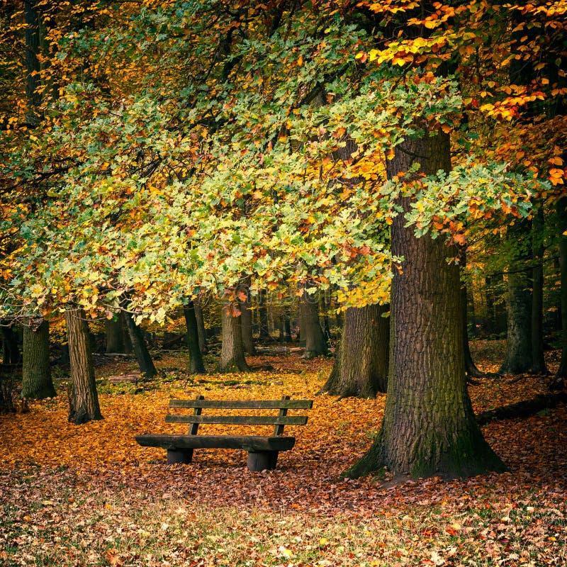 Ławka w jesień lesie zdjęcia royalty free
