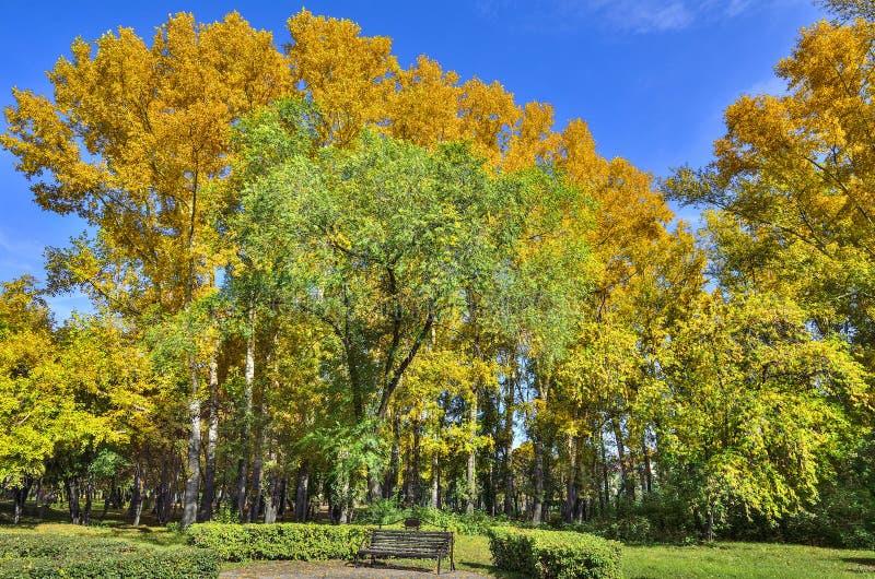 Ławka w jesień parku pod multicilored ulistnieniem spadków drzewa obraz royalty free