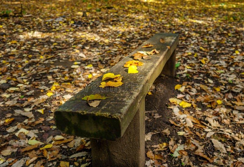 Ławka w jesieni zdjęcia royalty free