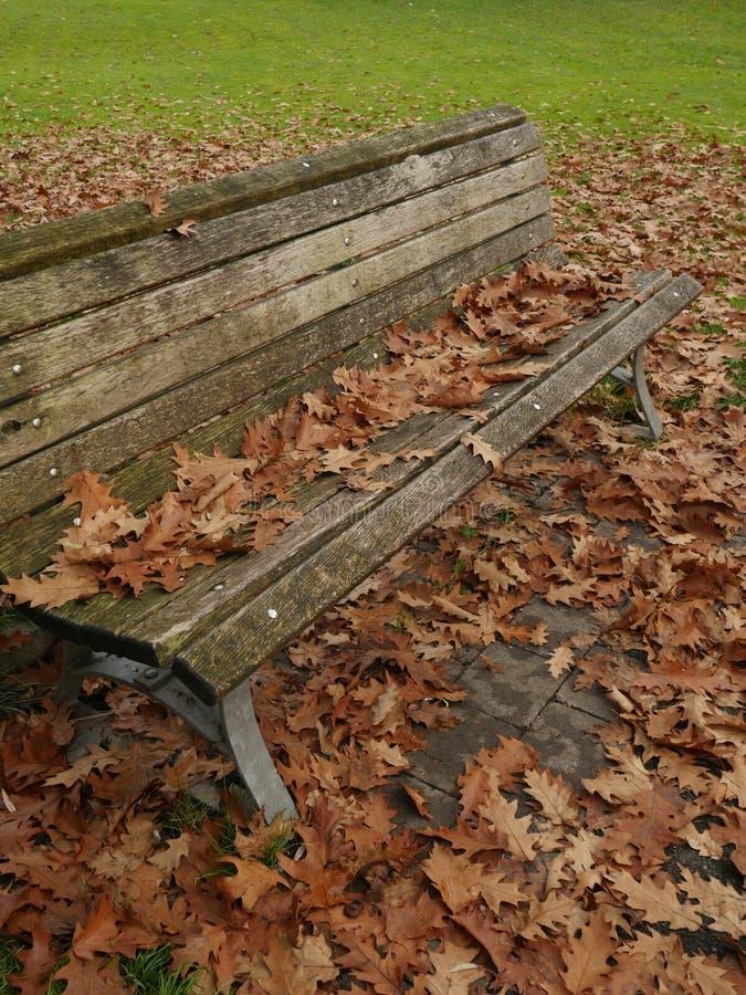 Ławka z leafes w jesieni obraz stock