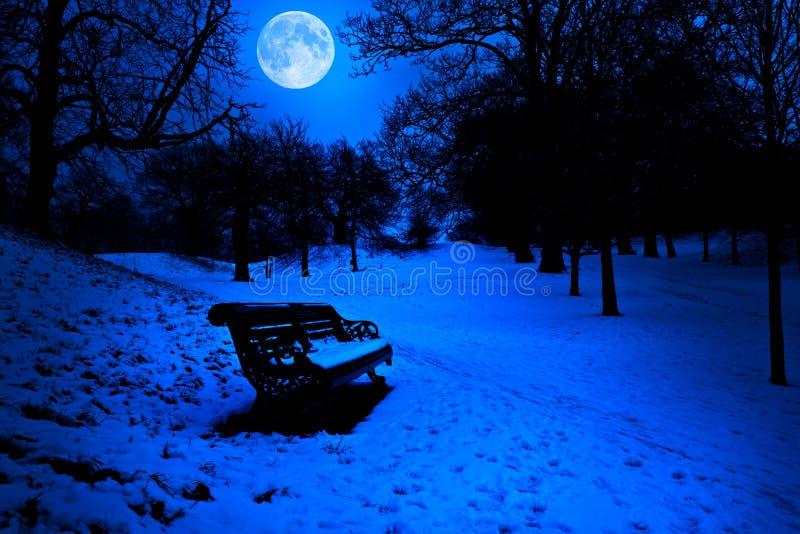ławka zakrywał północ śnieg fotografia royalty free