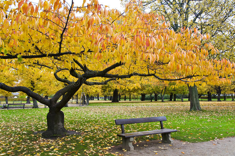 ławki drzewa kolor żółty obraz stock